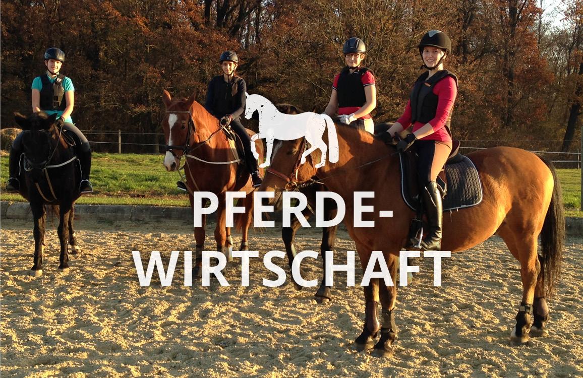 Pferdewirtschaft in der LFS Güssing
